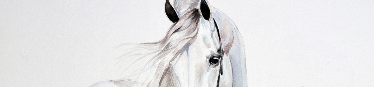 Horse-Solutions.com